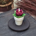 Свещ лале пурпур саксийка