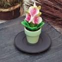 Свещ орхидея саксийка