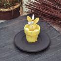 Свещ зайче в саксийка