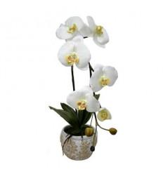 Орхидея бяла в саксия 45см.